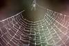 spider (primemundo) Tags: odc spider web macro trap