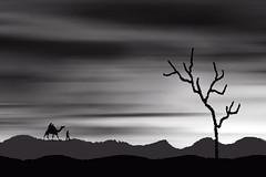 SERENITY (Arunabha Kundu) Tags: creative artistic monochrome camel desert man tree sky