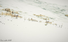 Invasion (TONICOSTA) Tags: formentera algas
