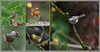 KUS_850-7629 (Weinstöckle) Tags: kernbeiser rotkehlchen sumpfmeise goldammer heckenbraunelle vogel