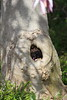 Y-A-W-N... (Jen_Vee) Tags: tree trunk bark magnolia spring plants yawn faces pareidolia lookslike seeingthings sleepy gardens chanticleer mouth tooth petals wood hole opening snore