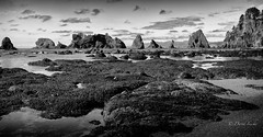 North to Flattery (D. Inscho) Tags: olympiccoast pointofthearches washington washingtoncoast pacificnorthwest seastack tidepool tidelands