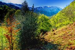 18/52 Naturaleza: A los pies del coloso (Lufersa007) Tags: nieve snow mountain montaña asturias redes bosque forest tree arbol