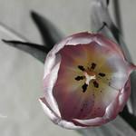 délicatesse - delicacy thumbnail