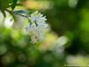 (takafumionodera) Tags: em1 mishima olympus omd park rakujuen shizuoka 三島 公園 楽寿園 静岡
