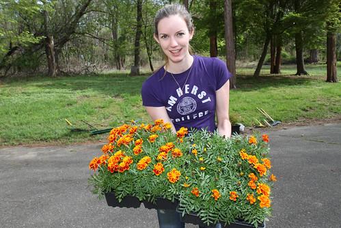 I Love My Park Day - Volunteers Planted Deer Resistant Marigolds