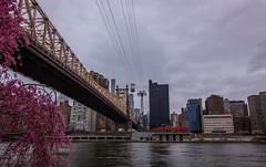 Ed Koch Queensboro Bridge (trombone65 (PhotoArt Laatzen)) Tags: newyorkcity usa nyc newyork seilbahn rooseveltisland queensborobridge edkochqueensborobridge