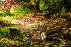 Nature's Hideaway, Chawton House (mynamesleon) Tags: garden rural nature countryside tree trees trail grass wood soil forest bench steps fern ferns