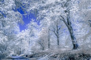 A walk in the paradise garden    Infrared series - 4