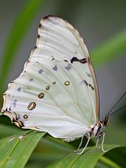 Butterfly #4 (Marco_964) Tags: butterfly reflex pentaxk50 pentax farfalla closeup colori colors