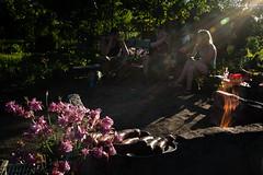 . (Joanna Mrowka) Tags: garden poland cracow streetphotography travelphotography street travel allotment summer freetime ngc