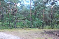 Волинський ліс Лісова дорога InterNetri Ukraine 1392094738