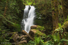 Merriman Falls (buffdawgus) Tags: quinaultrainforest quinault washington waterfall oympicnationalforest longexposure canonef24105mmf4lisusm lightroom6 topazsw canon5dmarkiii southshoredrive graysharborcounty merrimanfalls landscape olympicnationalpark