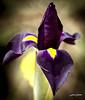 Lyrio (Lisa Claros) Tags: nature naturaleza natural spain españa flor flower espinas sierra macro malaga macroworld macrofotografia