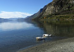 Peaceful. (jenichesney57) Tags: nz ducks white panasoniclumix queenstown walterspeak blue sky water lake sun mountains view landscape