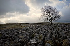 Malham (plot19) Tags: yorkshire dales england tree trees uk britain landscape light mood sony rx100 limestone sky north northern plot19 photography lonesome lonely
