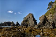 Rugged coast trail (D. Inscho) Tags: olympiccoast pointofthearches washington washingtoncoast seastack pacificnorthwest