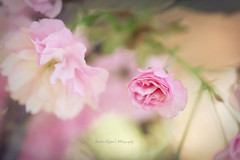 """""""You charm as evening charms, Warm and shadowy Nymph."""" (Sandra Köppen 