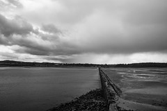 Lauriston and Crammond with Alastair April 2018 (114 of 126) (Philip Gillespie) Tags: crammond lauriston castle keep gardens park green blue red yellow orange colour color mono monochrome black white sea seascape landscape sky clouds drama dramatic walkway path flowers leaves trees april spring defences canon 5dsr people rust metal grafitti man dog petals bluebells dafodils holly blossom pond forth water wet rain sun reflections architecture mirrors gold japan garden sunlight scotland