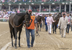 Walking Over (Casey Laughter Media) Tags: 2018copyright churchilldowns louisville kentucky kyoaks toinette scatdaddy edgewoodstakes gradedstakes turf rushingfall canon canon7dmii canonphotography canonusa canonlens action actionphotography