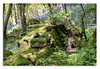 Bluebells in Yorkshire (johnhjic) Tags: johnhjic nikon d850 northyorkshire bluebells blue bells green wood woods woodland flower roots moss spring may sun shade carpet trees