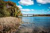 ºº Black Bridge in auTumn ºº (m+m+t) Tags: dscf55781 mmt meredithbibersteindesign newzealand northisland hawkesbay haumoana fujixt1 fujixseries fujimirrorless 1855mm outdoors river autumn water trees willows bridge tukitukiriver clive