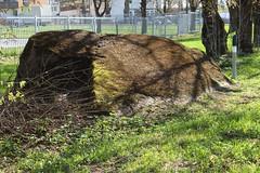 Kivi (Jaan Keinaste) Tags: olympussh1 eesti estonia harjumaa raevald jürialevik kivi stone