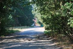 Волинський ліс Лісова дорога InterNetri Ukraine 0484107172