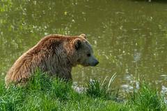 _DSC2184.jpg (Burghart-Alexander) Tags: orte deutschland pflanze poing umwelt bäumeundsträucher wildpark tiere bayern bundesland europe