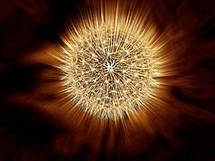 Seedhead (ronramstew) Tags: seedhead mono panasonic25mm17 dandelion