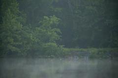 DSCF7512.jpg (zane.hollingsworth) Tags: 560mm quackattackpack mosslake 1125ss iso4000 840mm35eqv kim ducks f8