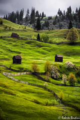 Green fields (Roberto Bendini) Tags: romania canon sibiu brasov transylvania bucovina maramures europa europe easter meadows prato mountain montagna montagne cabane landscape thunderstorm spring primavera printemps