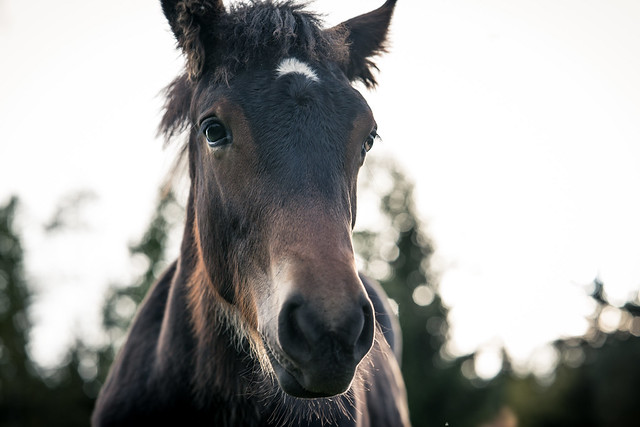 Close up of Foal