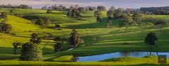 Wild Eyes (Artistry & Love) Tags: aus australia blue green brisbane celestial coast downunder ethereal fineart heavenly landscape magic mysterious mystical nature qld queensland scene scenery spirit spiritual sunshinecoast maleny witta
