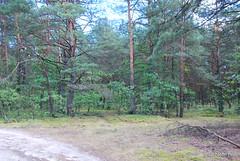 Волинський ліс Лісова дорога InterNetri Ukraine 0845285584
