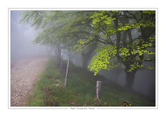 Oianleku (Iñaki V.T.) Tags: oianleku aiakoharria gipuzkoa euskalherria paysbasque