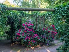P5132058 (Photodendron) Tags: em1mk2 britzergarten