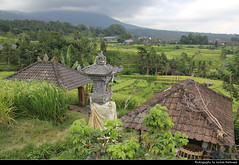 Jatiluwih Rice Terraces, Bali, Indonesia (JH_1982) Tags: jatiluwih rice terraces terrace reis terassen reisterasse farm farming farmer mountains nature landscape scenery scenic green tabanan unesco world heritage site bali 巴厘岛 バリ島 발리섬 бали indonesia indonesien indonésie 印度尼西亚 インドネシア 인도네시아 индонезия