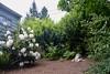 grateful (Danny W. Mansmith) Tags: home yard burienwashington grateful spring2018 nature inspiration hope time effort tired dannymansmith art handmade
