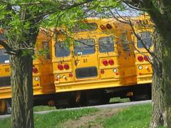 Freeman Bus Corp. #81 (ThoseGuys119) Tags: freemanbuscorp schoolbus watertownny thomasbuilt freightliner fs65 c2 saftliner yellowbumpers