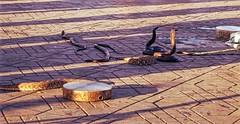 hypnotic (alebrigante) Tags: place snake morocco travel incantatori animali tradizione
