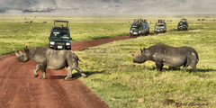 Gathering for Black Rhinos (Jill Rowland) Tags: africa tanzania wildlife landscape outdoors colorful travel tourism tourist nature