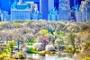 Blooming Central Park Manhattan (dannydalypix) Tags: gotham nyc manhattan springtimeinnewyorkcity blooming