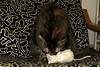 Alice & the White Mouse (Alfredo Liverani) Tags: happy caturday happycaturday toys canong5x canon g5x pointandshoot point shoot ps flickrdigital flickr digital camera cameras europa europe italia italy italien italie emiliaromagna romagna faenza faventia faience animal kitten gatto gatta gatti gatte cat cats chats chat katze katzen gato gatos pet pets tabby furry kitty moggy moggies gattino animale ininterni animaledomestico aliceellen alice ellen