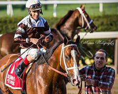 Blind Ambition (EASY GOER) Tags: horseracing equine sports thoroughbreds horse canon belmontpark thoroughbred