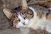 IMG_1751 (d_fust) Tags: cat katze pauline fust tier haustier kätzchen animal кот gato katt 貓 kissa γάτα 猫 kedi macska แมว gatto बिल्ली gatito γατάκι yavrusu 小貓 kitten का बच्चा anak kucing gattino 仔猫 고양이