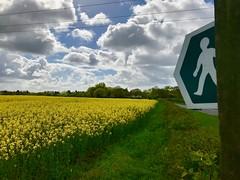 Walk across the fields (Ugborough Exile) Tags: ringwood hampshire hants england uk iphone 2018