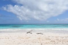 Driftwood (vbvacruiser) Tags: cruise vacation caribbean princesscruises royalprincess bahamas eleuthera beach lighthousebeach driftwood nikond750 nikon