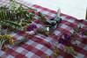 Ψίνθος (Psinthos.Net) Tags: ψίνθοσ psinthos mayday πρωτομαγιά μάιοσ μάησ άνοιξη may spring afternoon απόγευμα απόγευμαάνοιξησ ανοιξιάτικοαπόγευμα άγριαλουλούδια λουλούδια αγριολούλουδα κίτριναλουλούδια κιτρινάκια yellowflowers wildflowers flowers ροδόσταμο rosewater