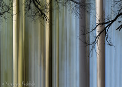 To the Light (KvonK) Tags: icm intentionalcameramovement blur forest composite blue green branches abstract creative kvonk may 2018